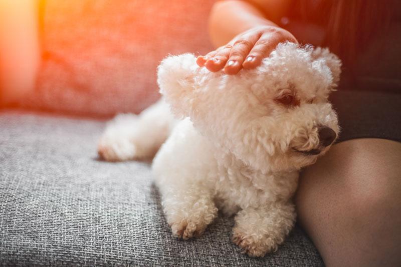 Benefici di vivere con un cane