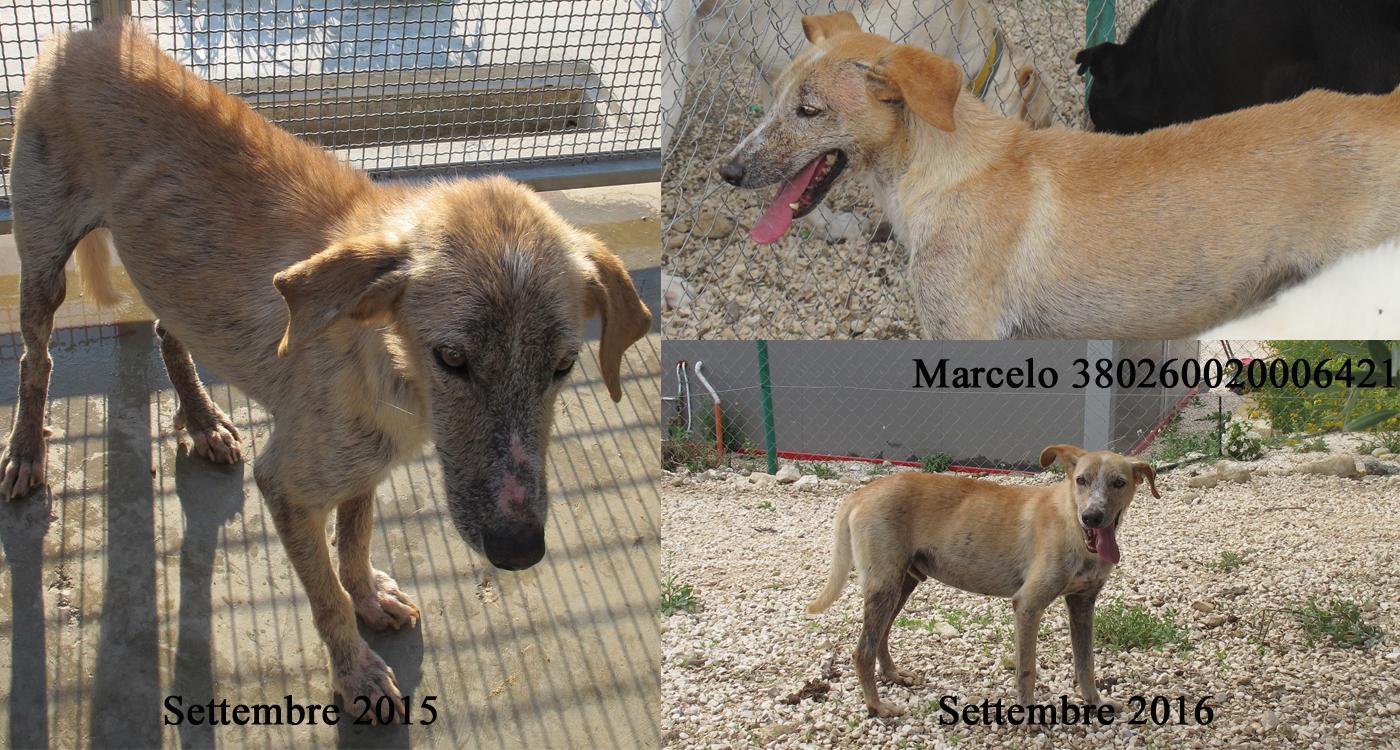 Marcelo-380260020006421.jpg
