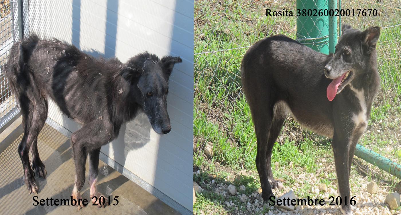 Rosita-380260020017670.jpg