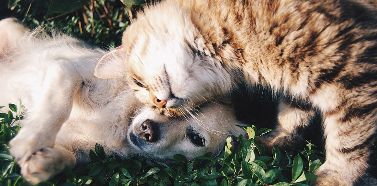 Problemi Di Relazione Tra Cane E Gatto Ecco Come Evitarli Canile