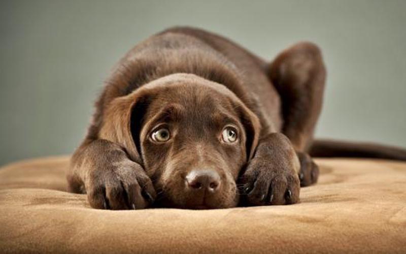 Capodanno: da OIPA alcuni consigli per proteggere i cani dal terrore dei botti.