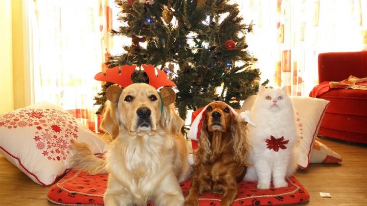 Un albero di Natale a prova di cane