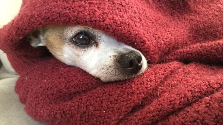Difendiamoli dal freddo! I 10 consigli della Lega Nazionale per la Difesa del Cane