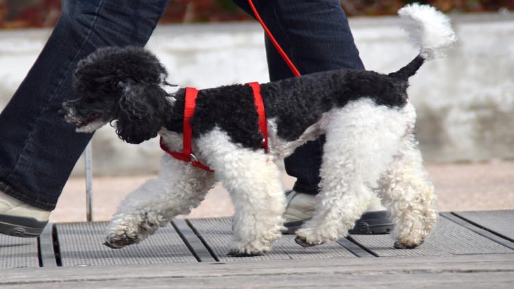 Cane e passeggiata: le nuove regole per la passeggiata in luoghi pubblici