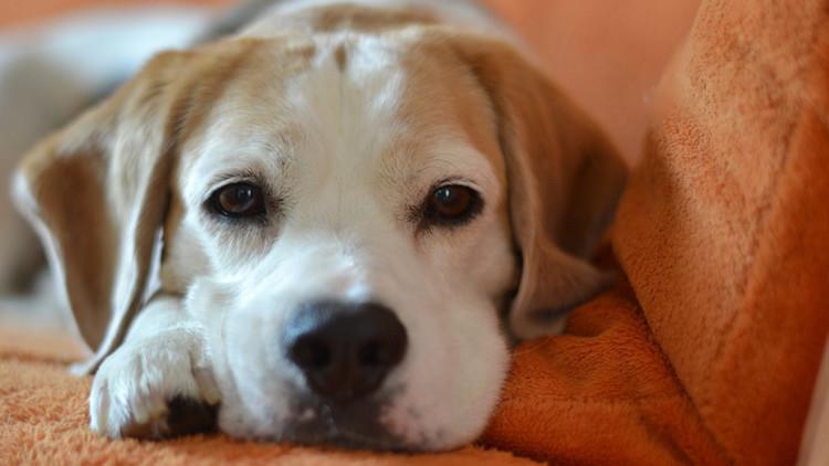 I cani sanno manipolare l'uomo? La risposta della scienza
