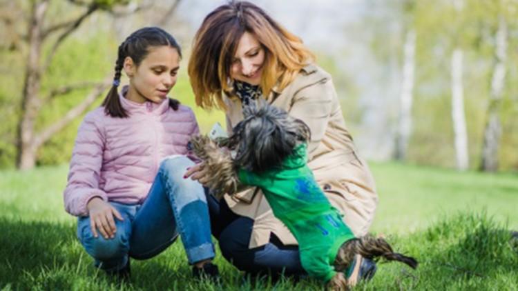 Come riconoscere se un cane è geloso