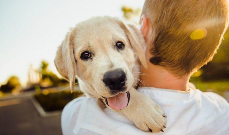 Quanto costa adottare un cane del canile?